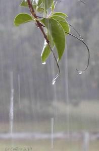 Rain at Utility Porch
